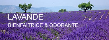 "Essential oil of lavender used by ""La savonnerie Bleu pastel"""